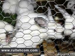 Сетка для кроликов, птиц, клеток, вольеров, заборов. Plasa
