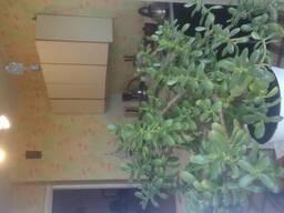 3 комнатная квартира в Тирасполе на Балке ( Чешка)