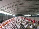 Быстро-возводимая животноводческая ферма - фото 2