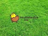 Инкубационные яйца маркерованые от птицефабрик Европы индюки , гуси, куры, утки - фото 8