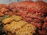 Картофель 60-120 - фото 1