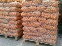 Картофель из Беларуси (Export)