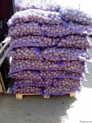 Картофель оптом Беларусь