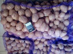 Картофель оптом Беларусь - photo 5