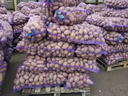 Картофель оптом (Беларусь)