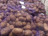 Литовский картофель желтый, красный / Прямо из Литвы - photo 1
