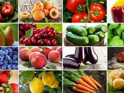 Морковь, помидоры, лук, грибы.