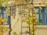 Продается хороший дом р-н Правда - фото 6