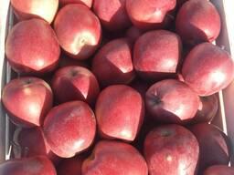 Продам яблоки в г. Брянске РФ - фото 6