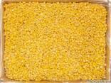 Продам замороженную кукурузу горошек зеленый фасоль - фото 1