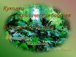 Продажа куколок тропических бабочек оптом, коконы бабочек.