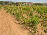 Столбики круглые виноградные - фото 3