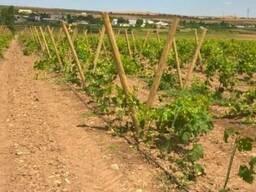 Столбики круглые виноградные