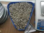 "Striped sunflower seeds ""Konfeta CL"" - photo 1"