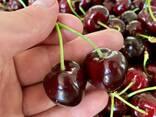 Sweet cherry from Bulgaria - photo 3