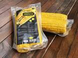 Вакуумированная вареная кукуруза в початках - photo 1