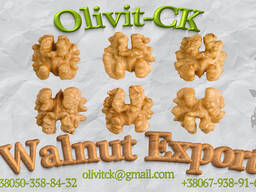 Walnut Export