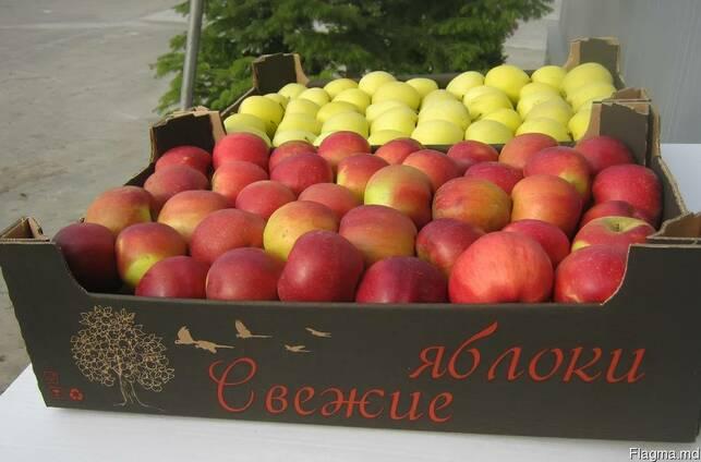 Яблоки : Жонаголд, Флорина, Рихард и др