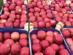 Яблоки молдавские