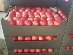Яблоки свежие.