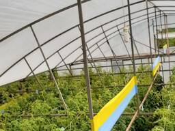 Желто-голубые рулонные ловушки 30смх100м