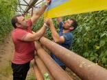Желто-голубые клеевые рулонные ловушки 30смх100м - фото 7